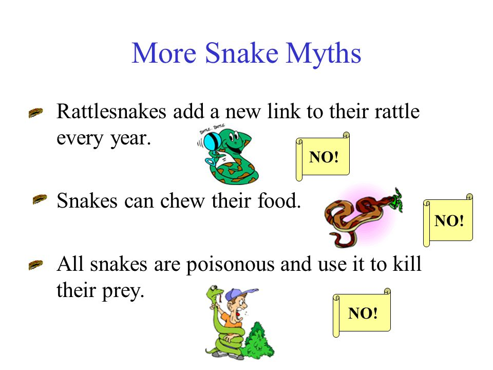 More Snake Myths Snakes can only strike when coiled. Some snakes have stingers on their tail. NO!