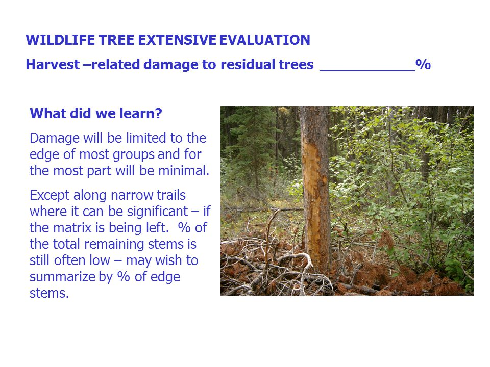 WILDLIFE TREE EXTENSIVE EVALUATION Harvest –related damage to residual trees___________% What did we learn.
