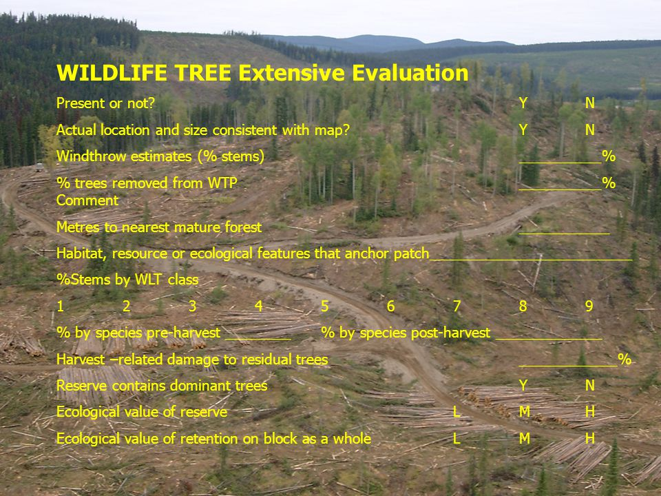 WILDLIFE TREE Extensive Evaluation Present or not?YN Actual location and size consistent with map?YN Windthrow estimates (% stems)__________% % trees removed from WTP__________% Comment Metres to nearest mature forest ___________ Habitat, resource or ecological features that anchor patch_________________________ %Stems by WLT class 123456789 % by species pre-harvest ________% by species post-harvest _____________ Harvest –related damage to residual trees____________% Reserve contains dominant treesYN Ecological value of reserveLMH Ecological value of retention on block as a wholeLMH
