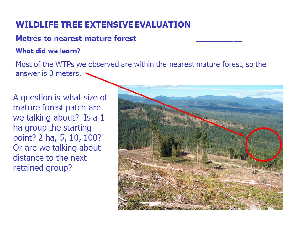WILDLIFE TREE EXTENSIVE EVALUATION Metres to nearest mature forest ___________ What did we learn.