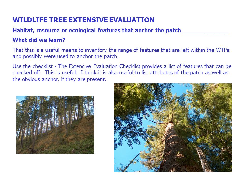 WILDLIFE TREE EXTENSIVE EVALUATION %Stems by WLT class 1 23456789 What did we learn.