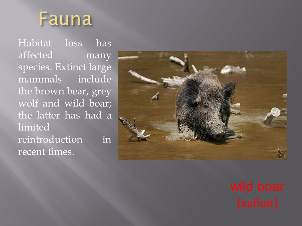 Fauna Habitat loss has affected many species.