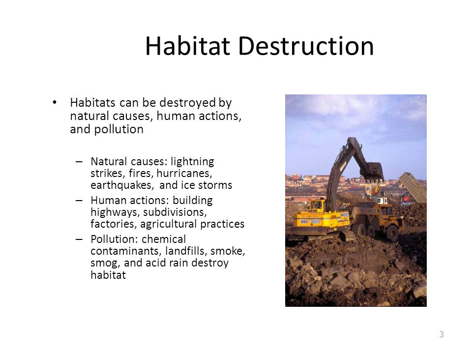 Habitat Destruction Habitats can be destroyed by natural causes, human actions, and pollution – Natural causes: lightning strikes, fires, hurricanes, earthquakes, and ice storms – Human actions: building highways, subdivisions, factories, agricultural practices – Pollution: chemical contaminants, landfills, smoke, smog, and acid rain destroy habitat 3