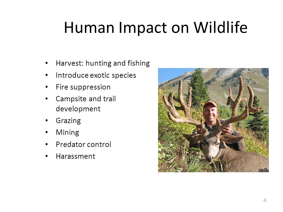 What is Human-Wildlife Conflict.