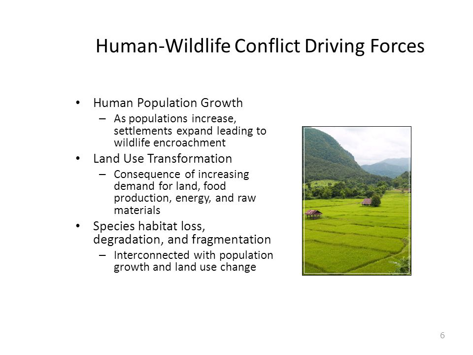 Human-Wildlife Conflict Driving Forces Human Population Growth – As populations increase, settlements expand leading to wildlife encroachment Land Use Transformation – Consequence of increasing demand for land, food production, energy, and raw materials Species habitat loss, degradation, and fragmentation – Interconnected with population growth and land use change 6