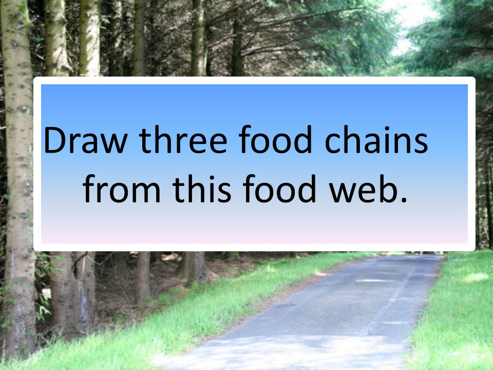 Draw three food chains from this food web.