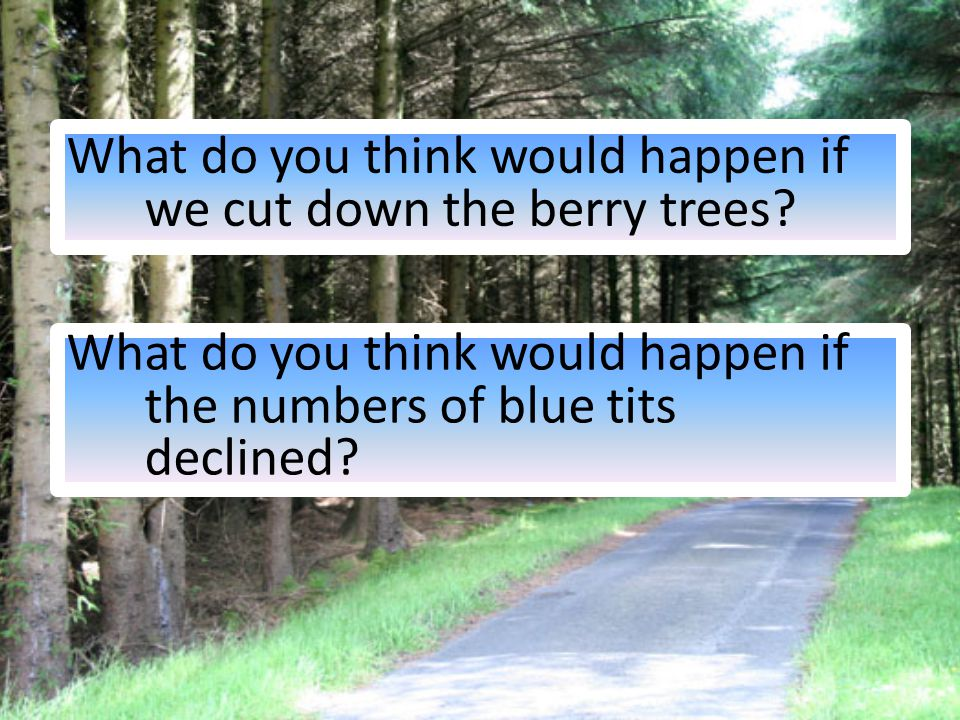 What do you think would happen if we cut down the berry trees.