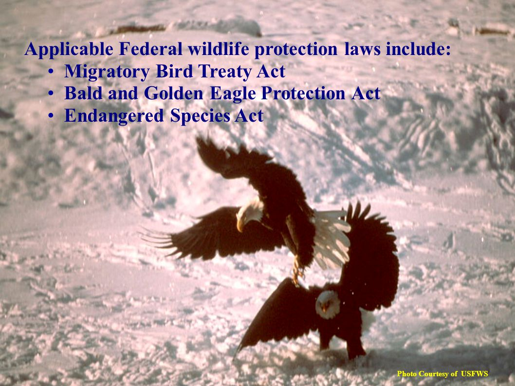 Applicable Federal wildlife protection laws include: Migratory Bird Treaty Act Bald and Golden Eagle Protection Act Endangered Species Act Photo Courtesy of USFWS