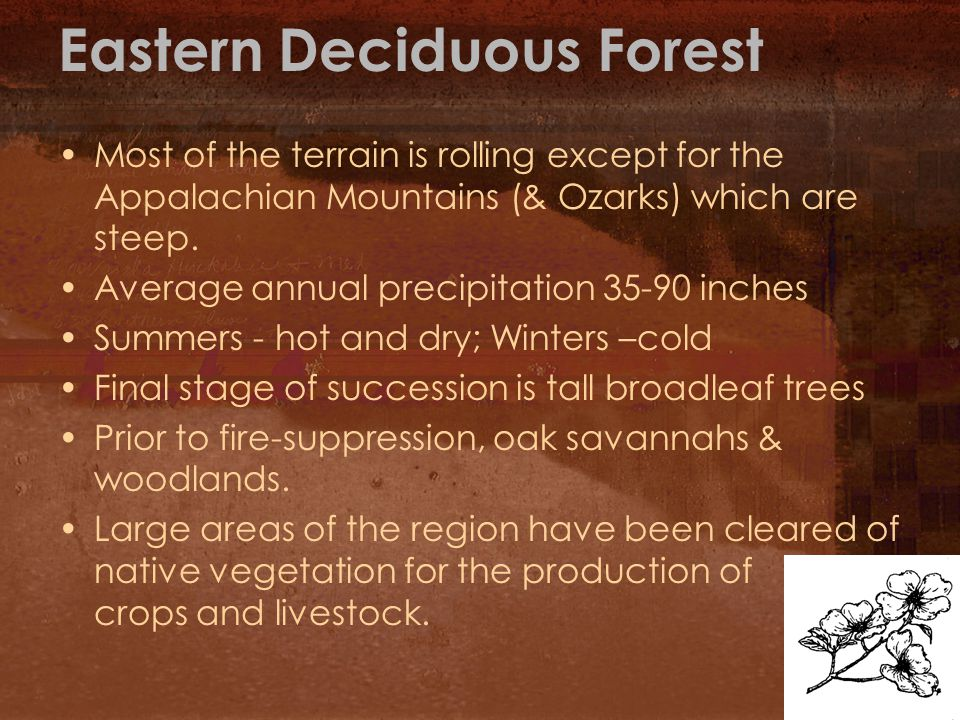 Eastern Deciduous Forest Most of the terrain is rolling except for the Appalachian Mountains (& Ozarks) which are steep.