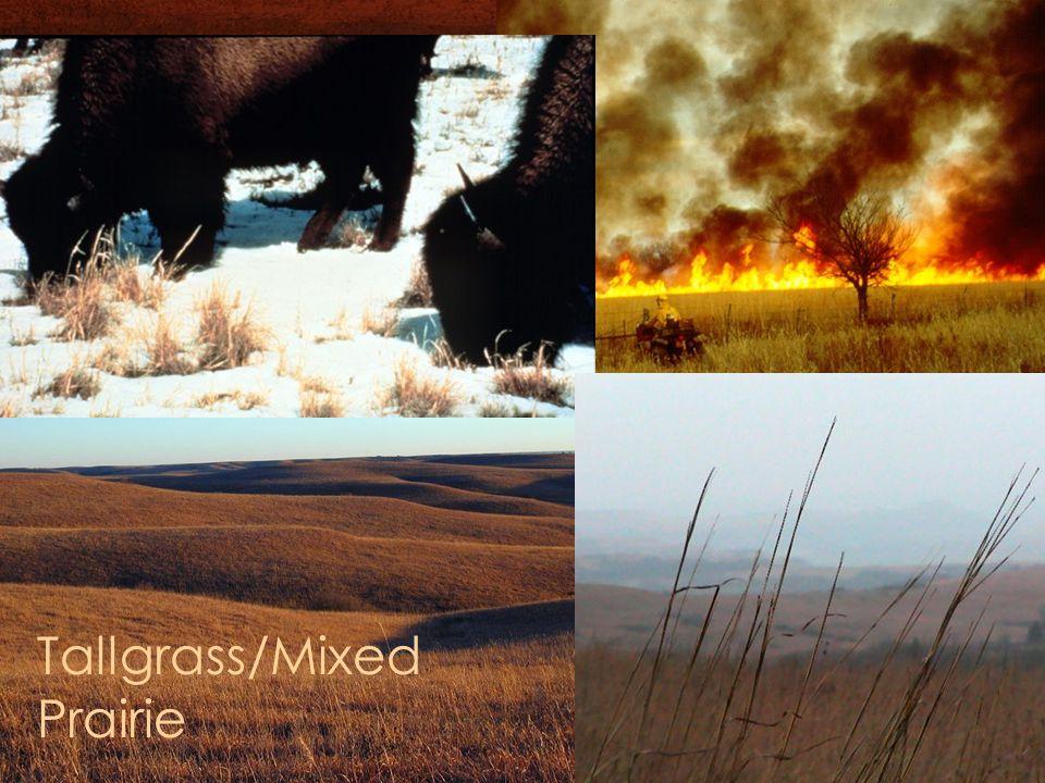 Tallgrass/Mixed Prairie