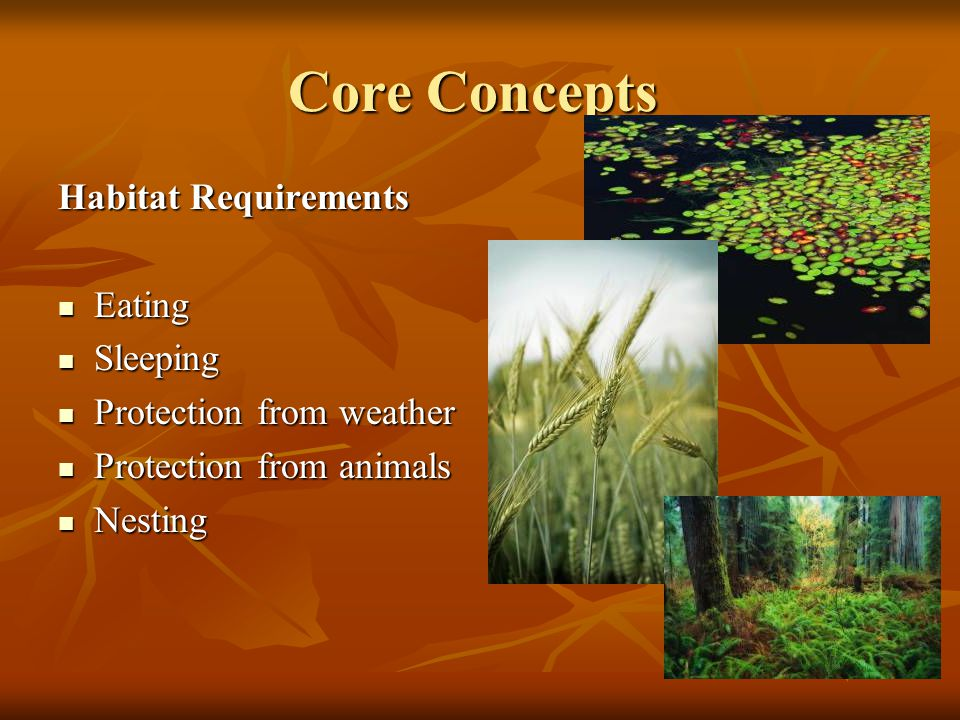 Core Concepts Habitat Requirements Eating Eating Sleeping Sleeping Protection from weather Protection from weather Protection from animals Protection from animals Nesting Nesting