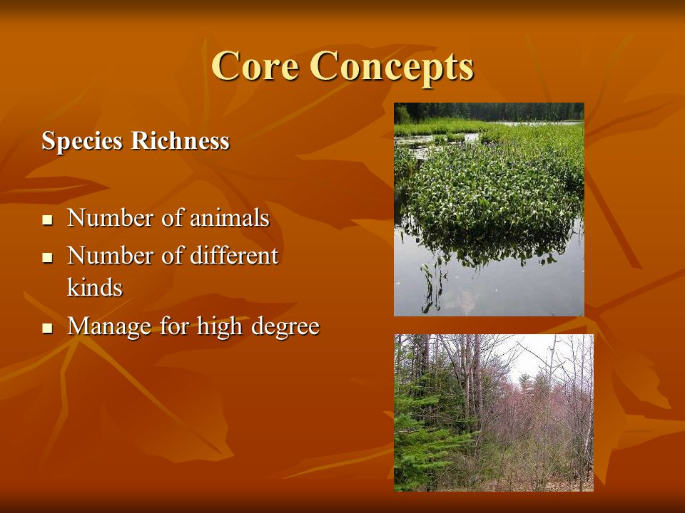 Core Concepts Species Richness Number of animals Number of animals Number of different kinds Number of different kinds Manage for high degree Manage for high degree
