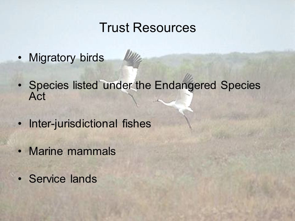 Trust Resources Migratory birds Species listed under the Endangered Species Act Inter-jurisdictional fishes Marine mammals Service lands