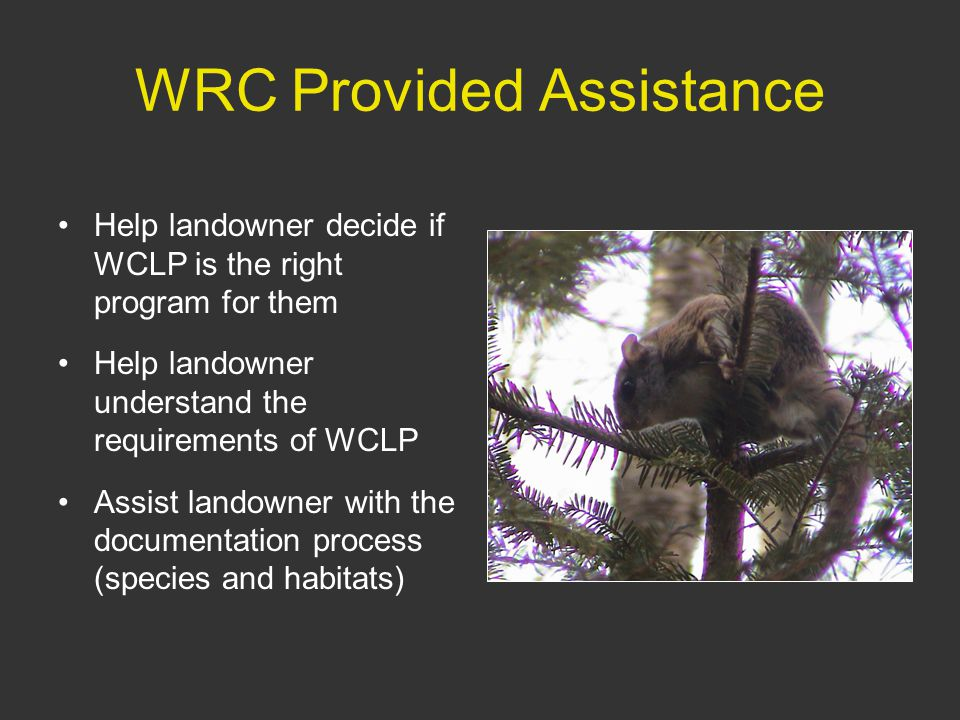 WRC Provided Assistance Help landowner decide if WCLP is the right program for them Help landowner understand the requirements of WCLP Assist landowner with the documentation process (species and habitats)