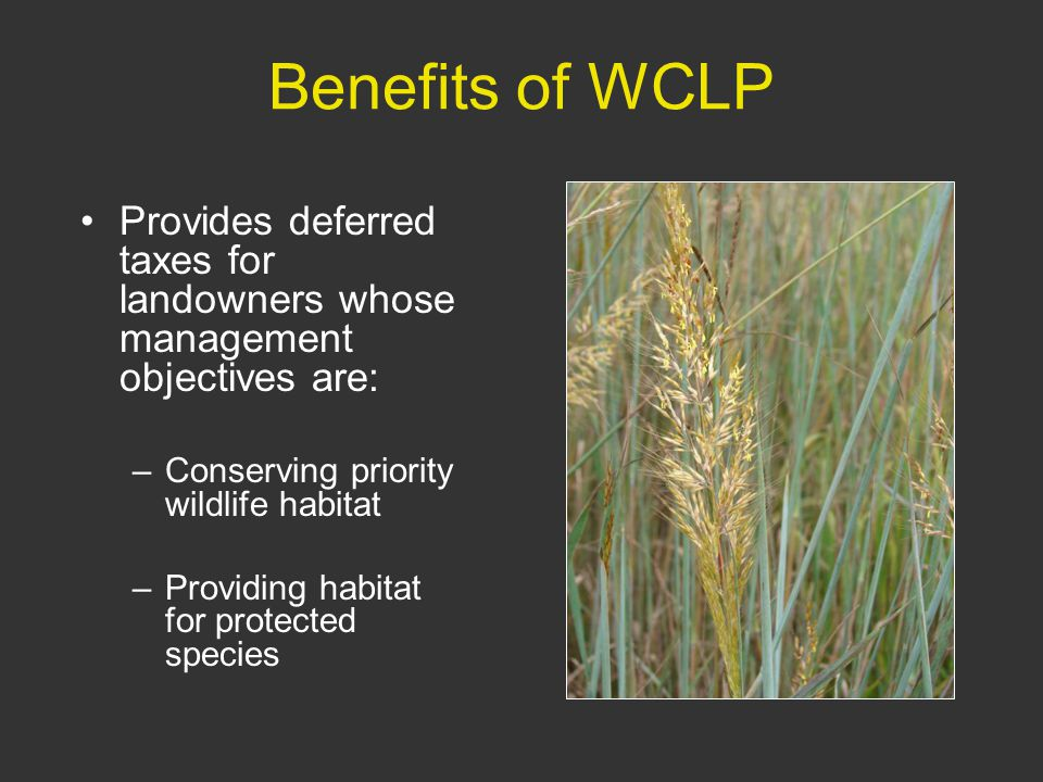 Benefits of WCLP Provides deferred taxes for landowners whose management objectives are: –Conserving priority wildlife habitat –Providing habitat for protected species