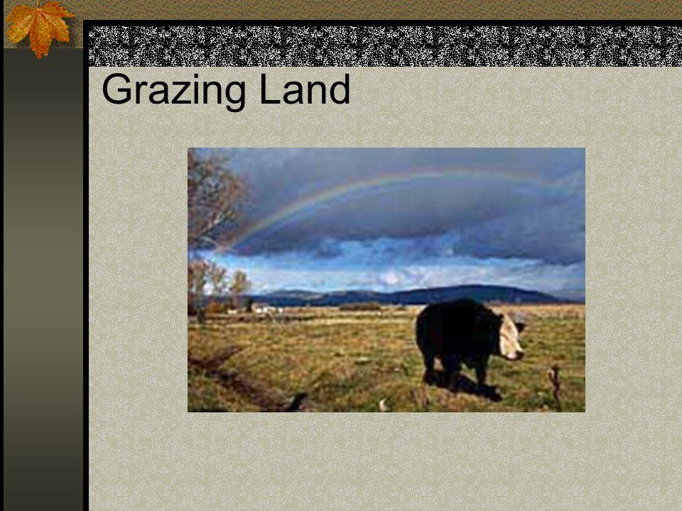 Grazing Land