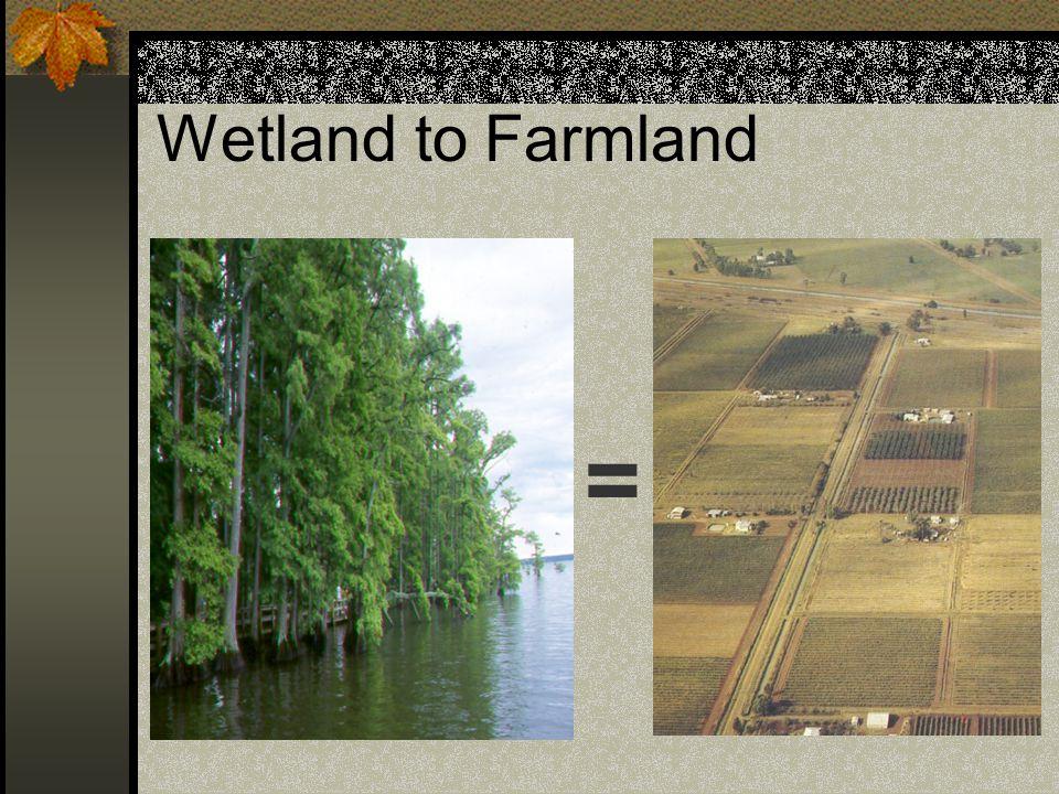 Wetland to Farmland =