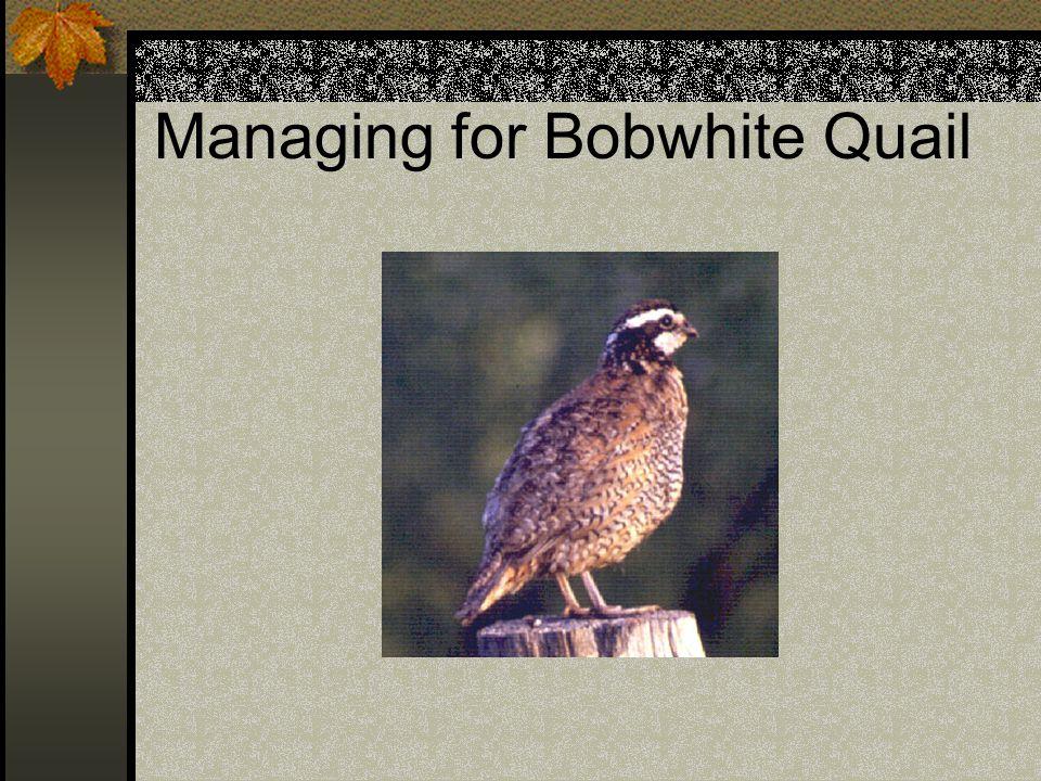 Managing for Bobwhite Quail