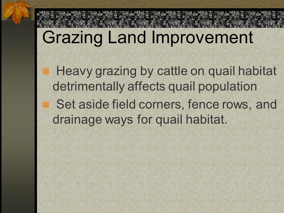 Grazing Land Improvement Heavy grazing by cattle on quail habitat detrimentally affects quail population Set aside field corners, fence rows, and drainage ways for quail habitat.