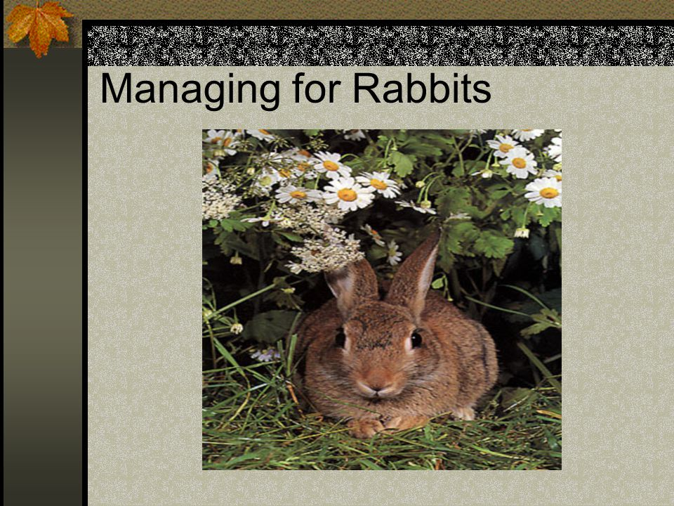 Managing for Rabbits