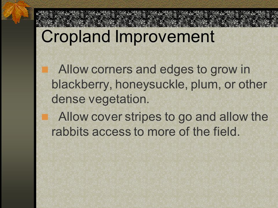 Cropland Improvement Allow corners and edges to grow in blackberry, honeysuckle, plum, or other dense vegetation.