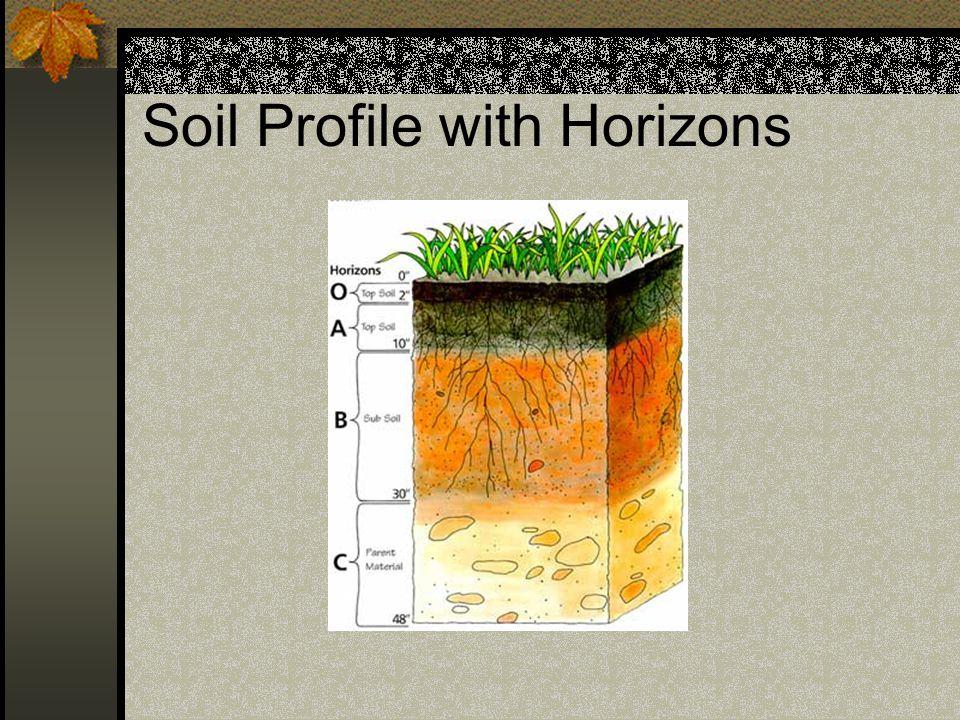 Soil Texture Direct correlation to size of soil particles Sand=course texture Silt=medium texture Clay=fine texture