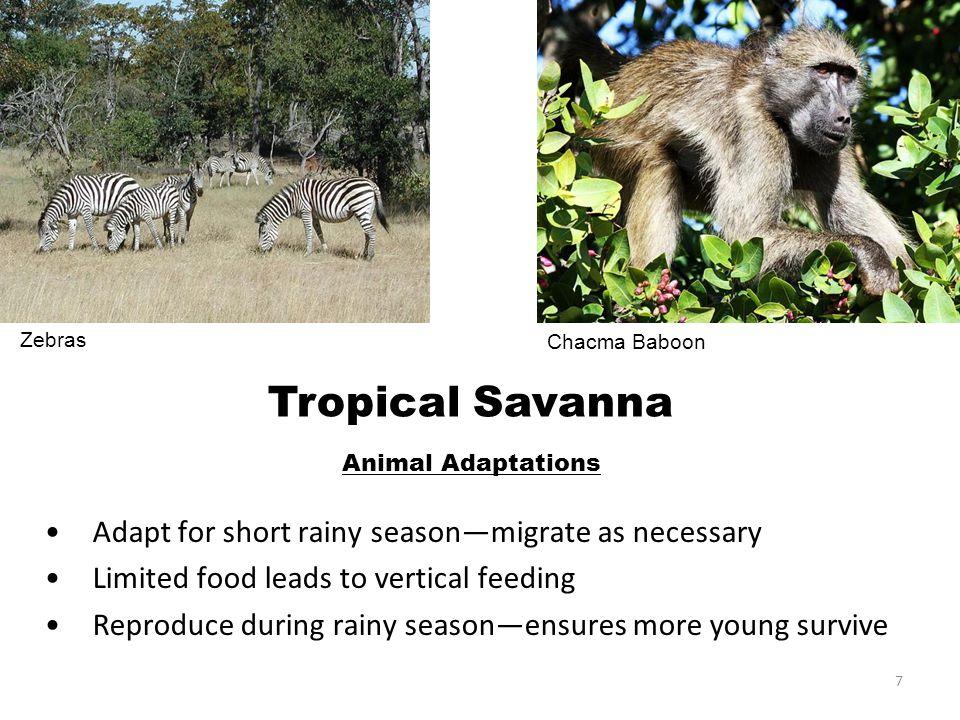 18 Slide 7, top left Description: Zebras.