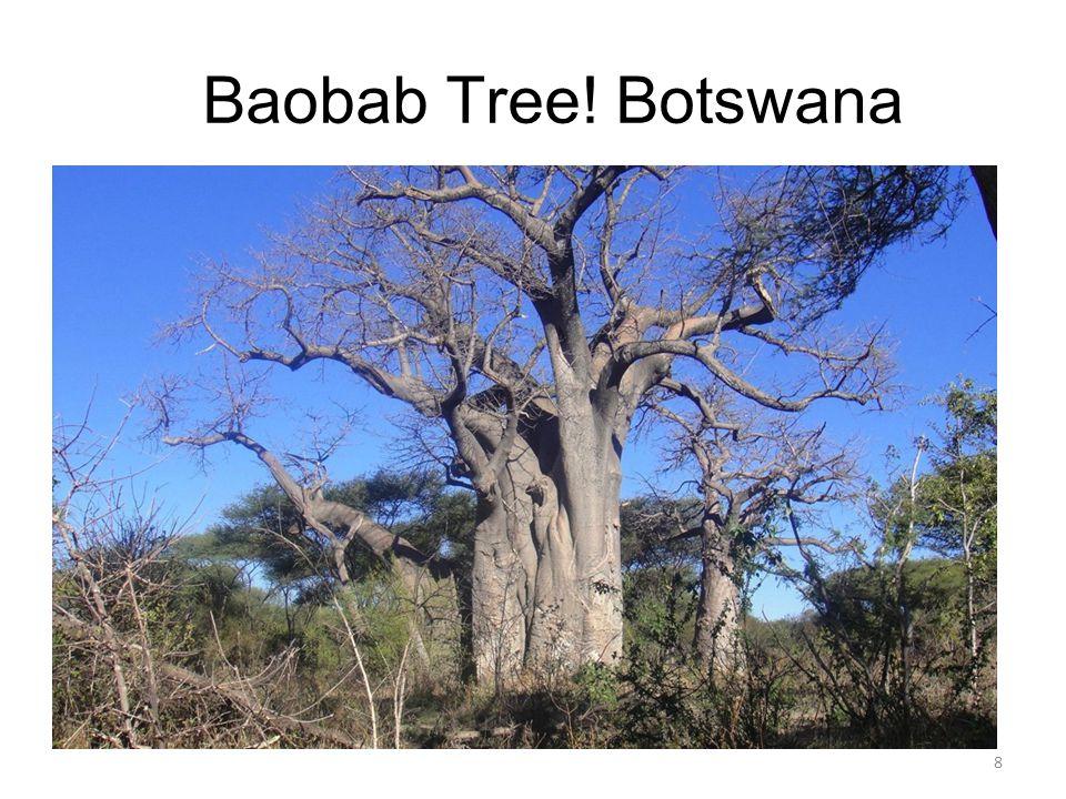 Baobab Tree! Botswana 8