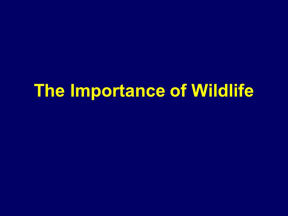 The Importance of Wildlife