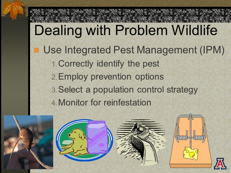 Dealing with Problem Wildlife Use Integrated Pest Management (IPM) 1.