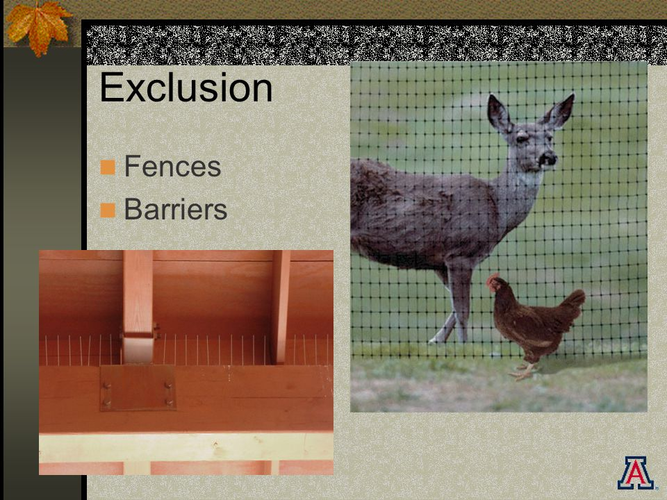 Exclusion Fences Barriers