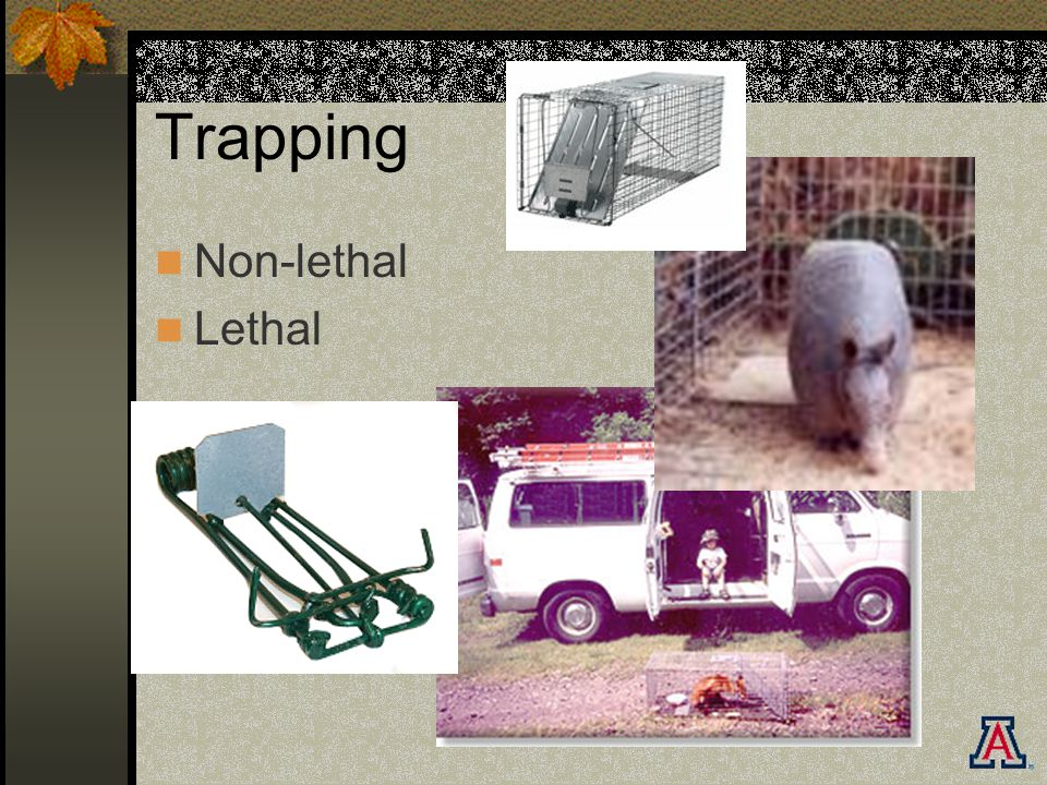 Trapping Non-lethal Lethal