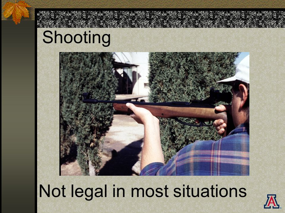 Shooting Not legal in most situations