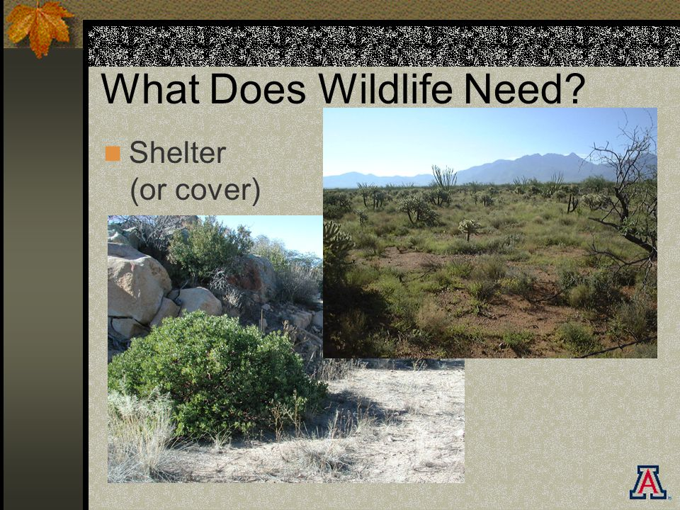 What Does Wildlife Need Shelter (or cover)