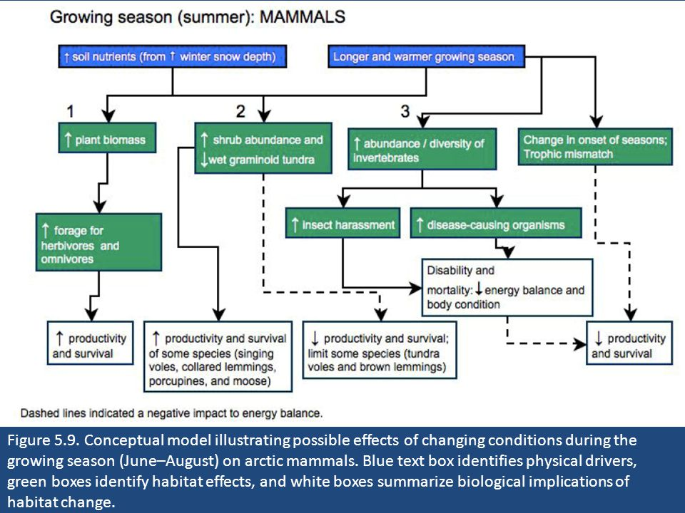 Figure 5.9. Conceptual model illustrating possible effects of changing conditions during the growing season (June–August) on arctic mammals. Blue text