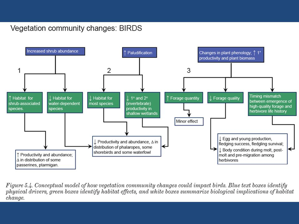 Figure 5.5.Conceptual model of how invertebrate community changes may impact birds.