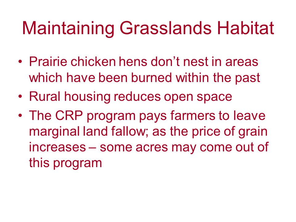 Maintaining Grasslands Habitat Prairie chicken hens don't nest in areas which have been burned within the past Rural housing reduces open space The CRP program pays farmers to leave marginal land fallow; as the price of grain increases – some acres may come out of this program