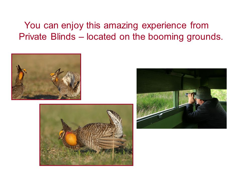 You can enjoy this amazing experience from Private Blinds – located on the booming grounds.