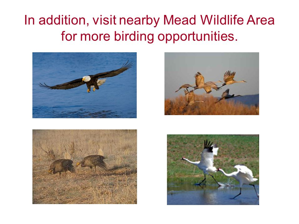 In addition, visit nearby Mead Wildlife Area for more birding opportunities.