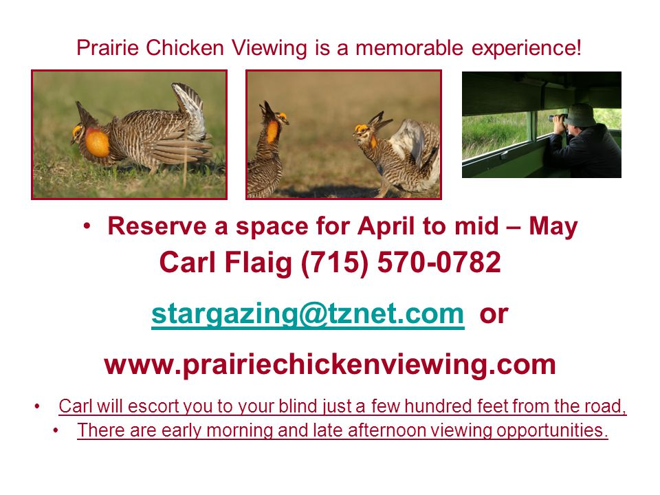 Prairie Chicken Viewing is a memorable experience.