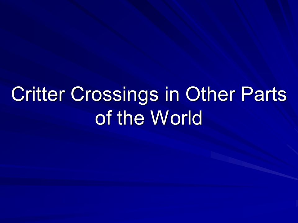 Critter Crossings in Other Parts of the World