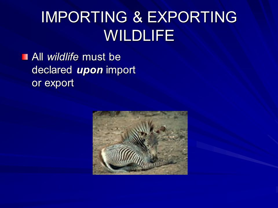 IMPORTING & EXPORTING WILDLIFE All wildlife must be declared upon import or export