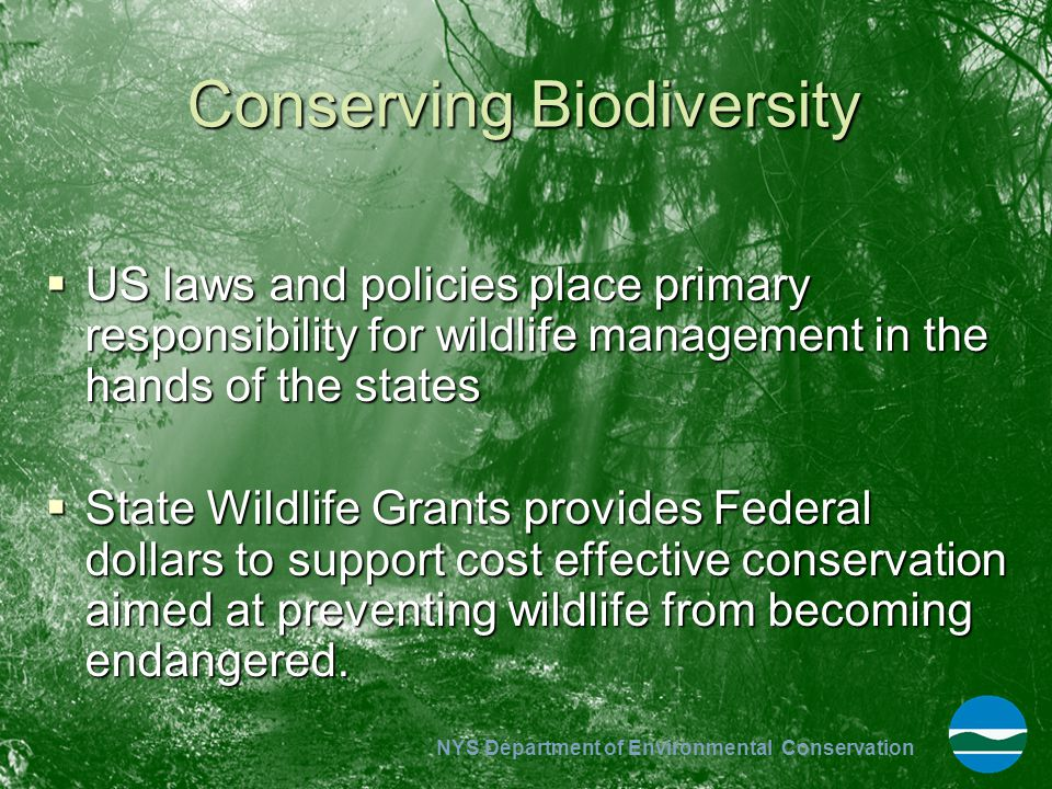 NYS Department of Environmental Conservation Conserving Biodiversity  US laws and policies place primary responsibility for wildlife management in th