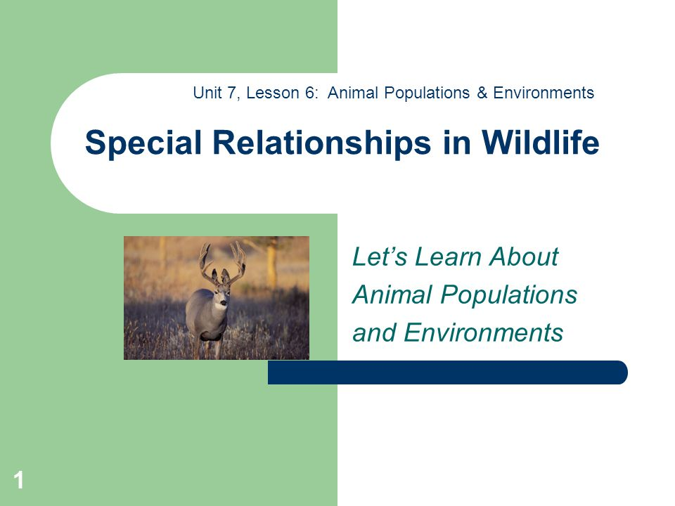 1 Special Relationships in Wildlife Let's Learn About Animal Populations and Environments Unit 7, Lesson 6: Animal Populations & Environments