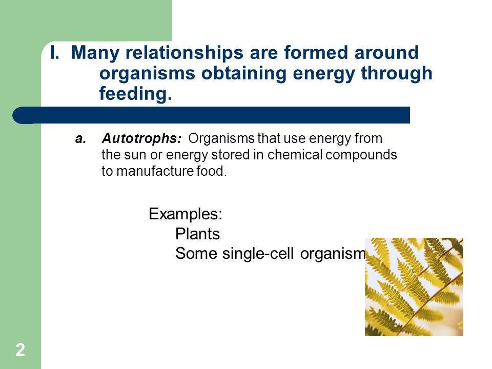 2 I. Many relationships are formed around organisms obtaining energy through feeding. a.Autotrophs: Organisms that use energy from the sun or energy s
