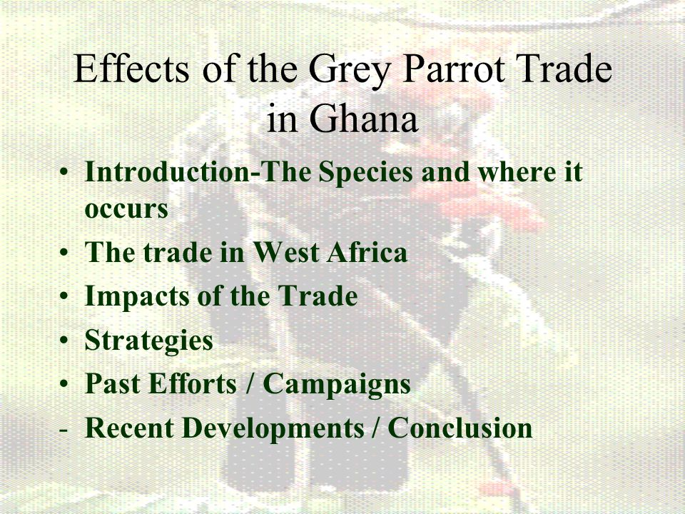 Effects of the Grey Parrot Trade in Ghana Introduction-The Species and where it occurs The trade in West Africa Impacts of the Trade Strategies Past Efforts / Campaigns -Recent Developments / Conclusion