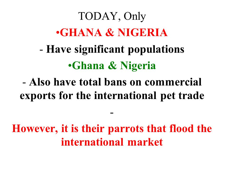 TODAY, Only GHANA & NIGERIA - Have significant populations Ghana & Nigeria - Also have total bans on commercial exports for the international pet trade - However, it is their parrots that flood the international market