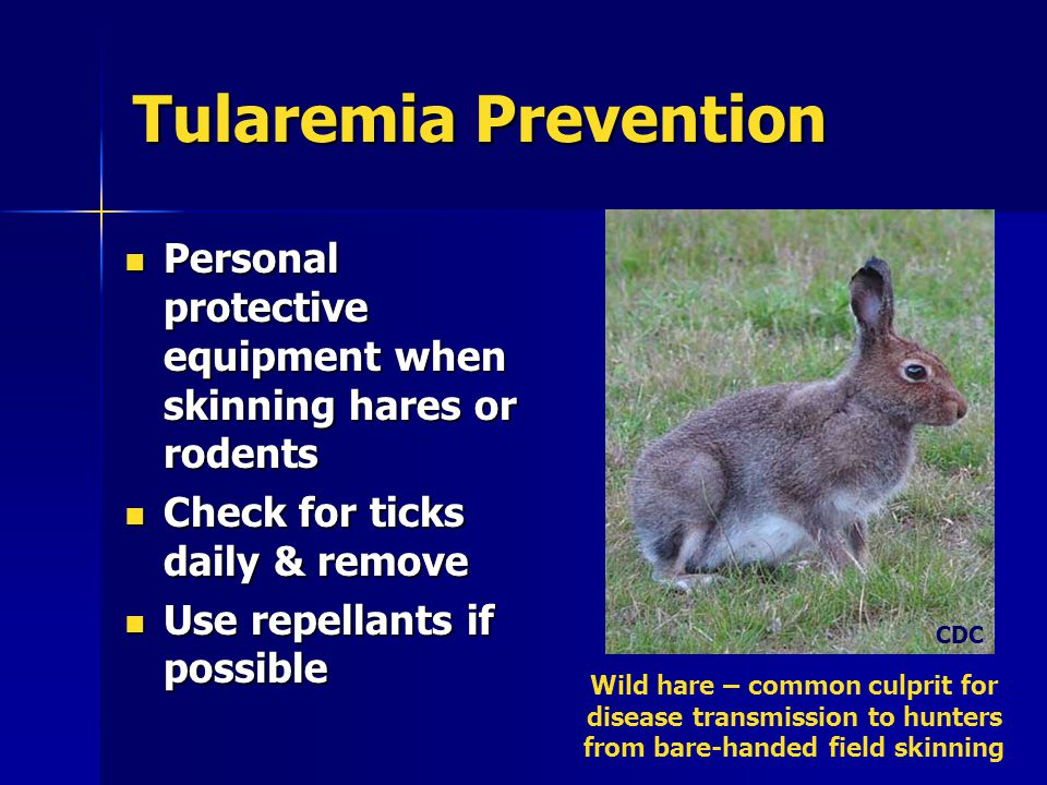 Tularemia Prevention Personal protective equipment when skinning hares or rodents Personal protective equipment when skinning hares or rodents Check for ticks daily & remove Check for ticks daily & remove Use repellants if possible Use repellants if possible Wild hare – common culprit for disease transmission to hunters from bare-handed field skinning CDC