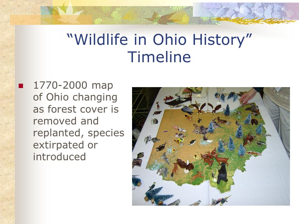 Wildlife in Ohio History Timeline 1770-2000 map of Ohio changing as forest cover is removed and replanted, species extirpated or introduced