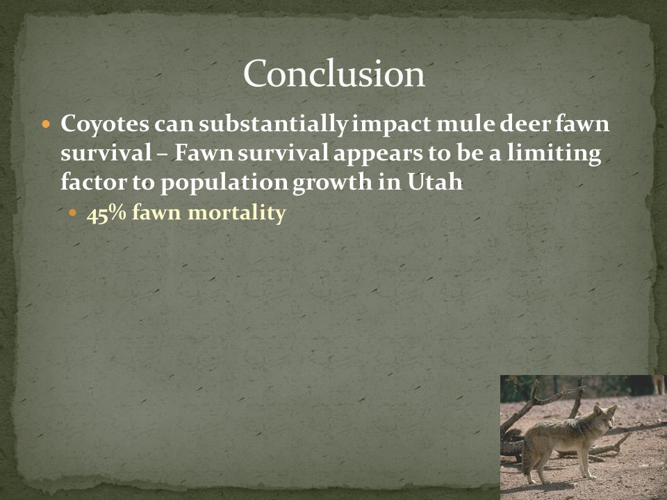Coyotes can substantially impact mule deer fawn survival – Fawn survival appears to be a limiting factor to population growth in Utah 45% fawn mortality
